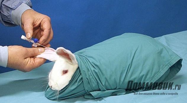 Как сделать укол декоративному кролику
