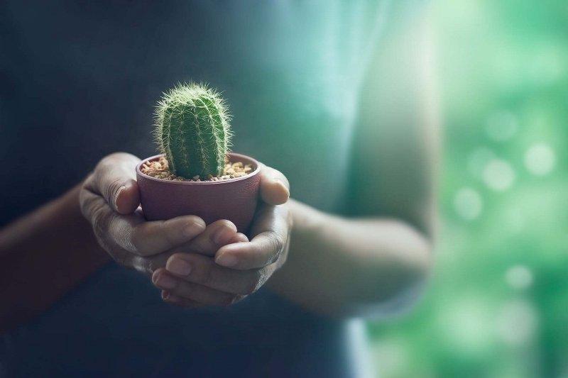 Как убить кактус