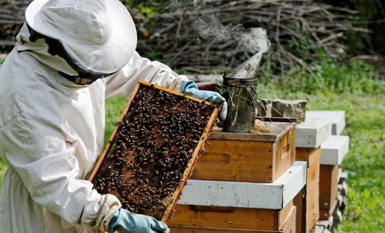 Бизнес план пчеловодство