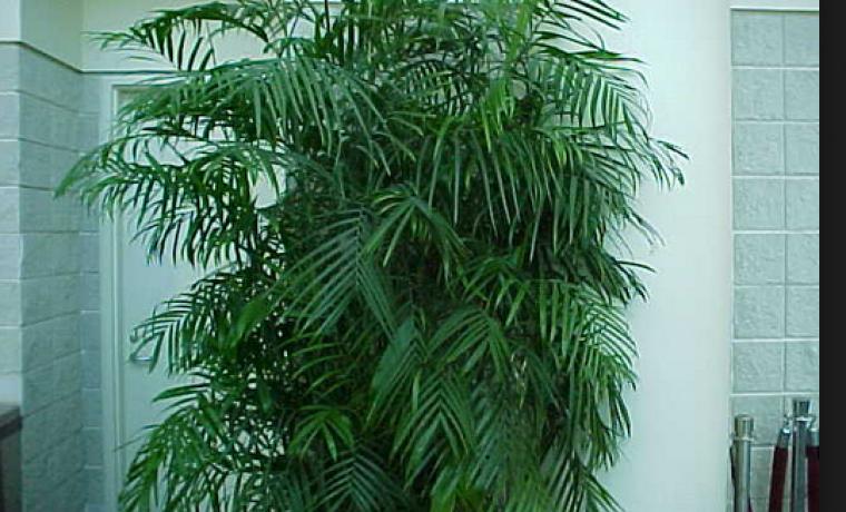 Тенелюбивые комнатные растения или что посадить в холле
