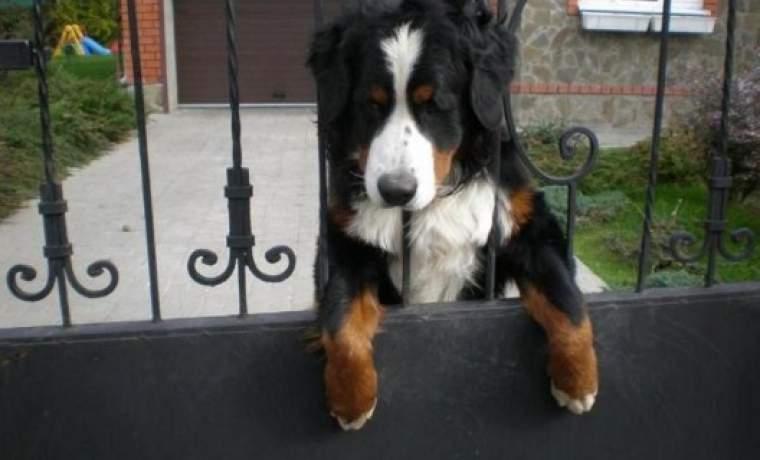 собаки охранники для частного дома