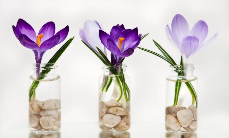 Как посадить и вырастить крокус