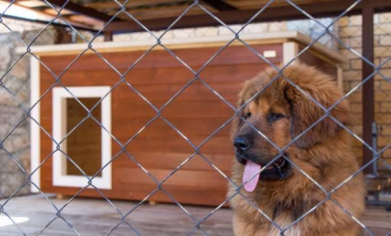 Как продезинфицировать будку собаки правильно