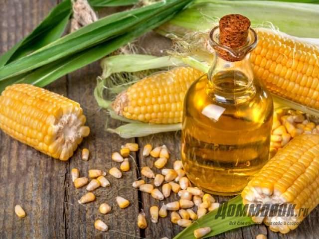 Масло кукурузное нерафинированное польза и вред