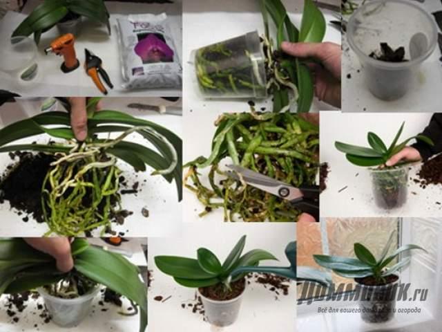Как ухаживать за домашней орхидеей после покупки?