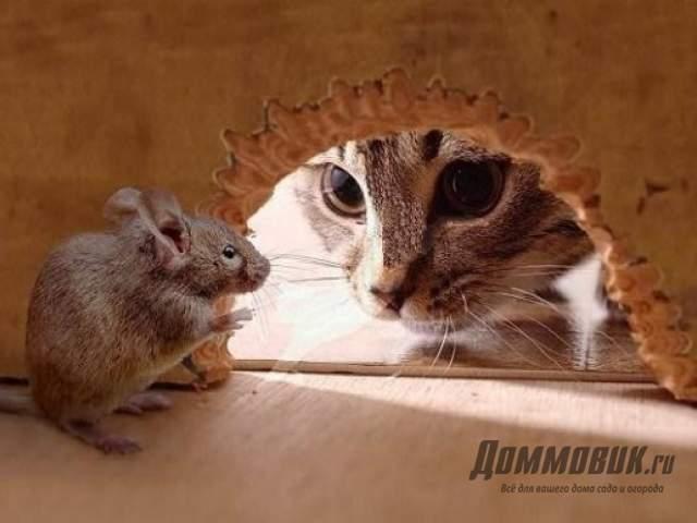 Почему появляются мыши