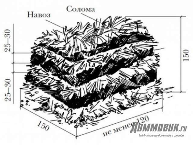 Выращивание шампиньонов как бизнес