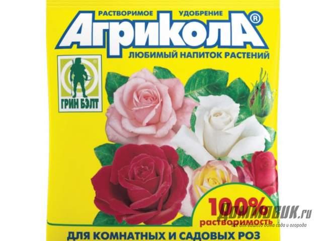 Удобрение для роз летом