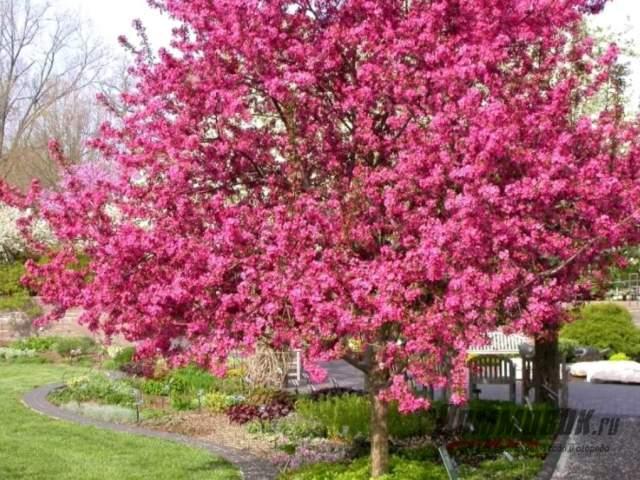 Необычные деревья для сада