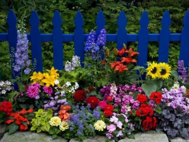 Какие красивые цветы посадить вдоль забора на даче