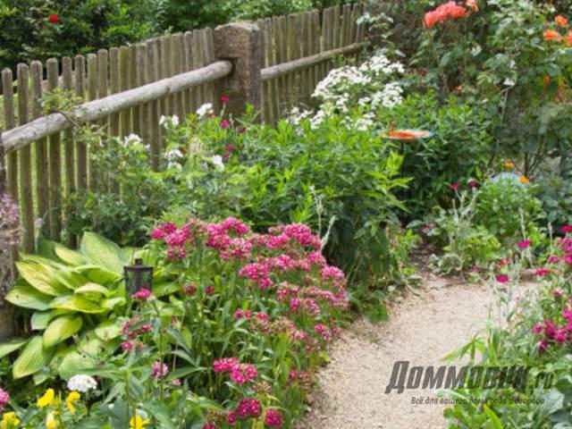 Что посадить вдоль забора на даче или в доме