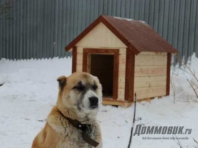 Правильное содержание собаки в будке