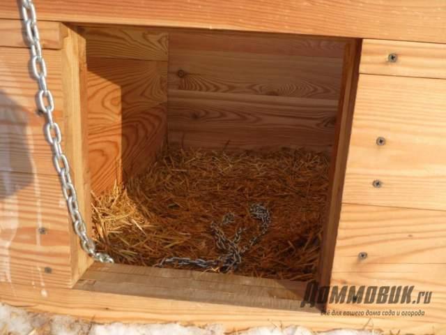 Содержание собаки в будке зимой