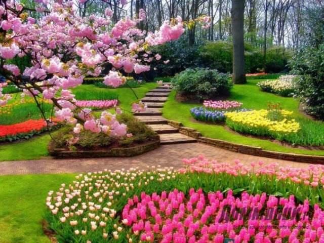 голландский парк весной