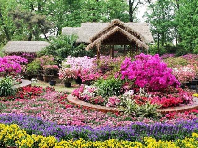 цветы в китайском саду