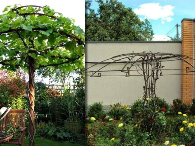 зонт из винограда