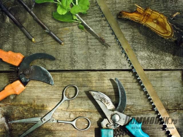садовые инструменты для обрезки
