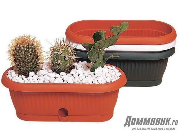контейнеры для кактусов