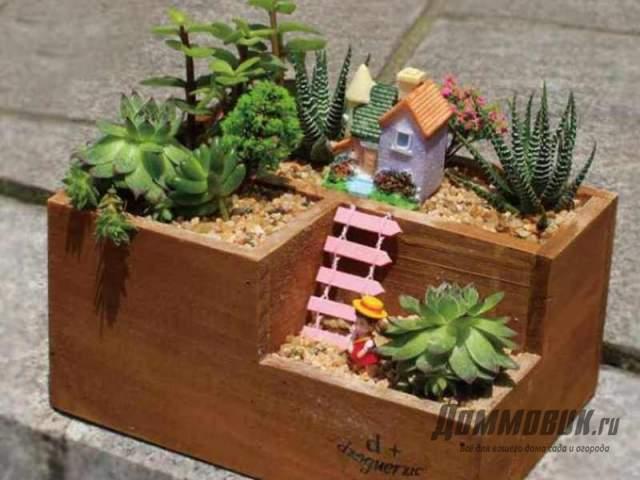 кактусы в деревянной коробке