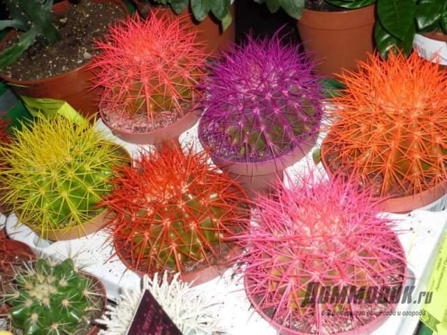 как подкрасить иголки кактуса - фото