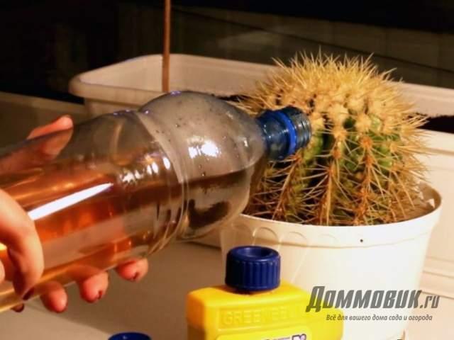 подкормка кактусов