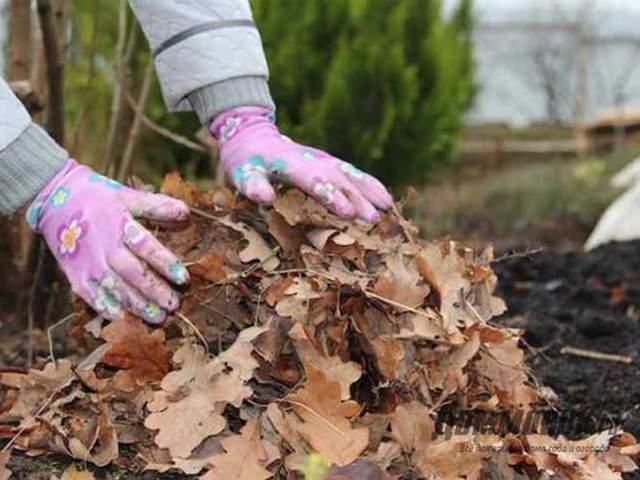 укрытие клумбы листовй
