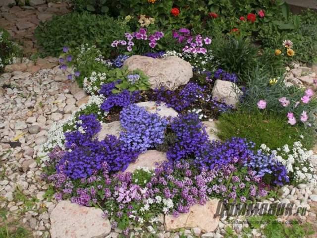 цветочный ручей из лобелии