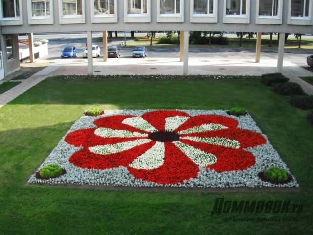 клумба - цветок