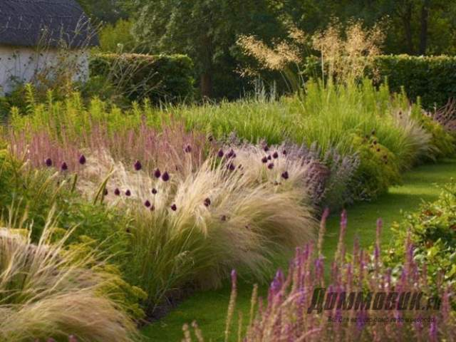 цветник из трав