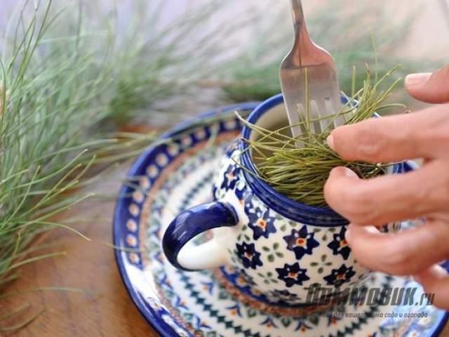 заваривание чая из сосновых иголок