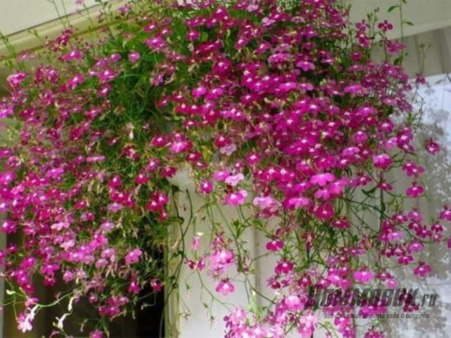 каскад из цветков