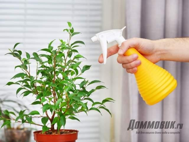 опрыскивание лимонного дерева