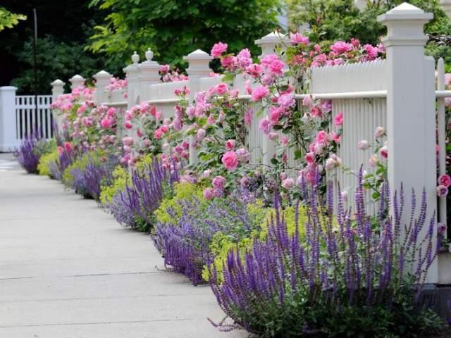 розы и полевые цветы