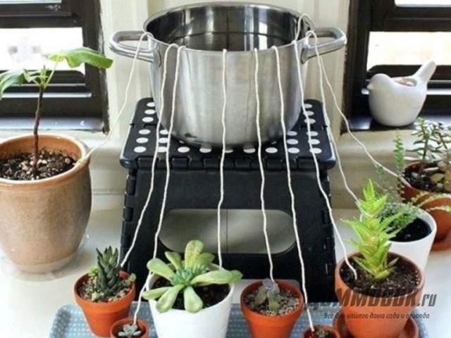 полив растений во время отпуска