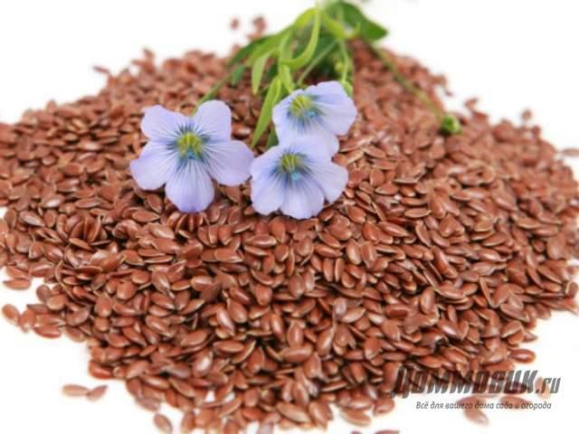 семена льна когда сеять