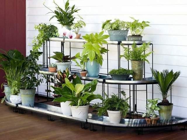 растения на этажерке