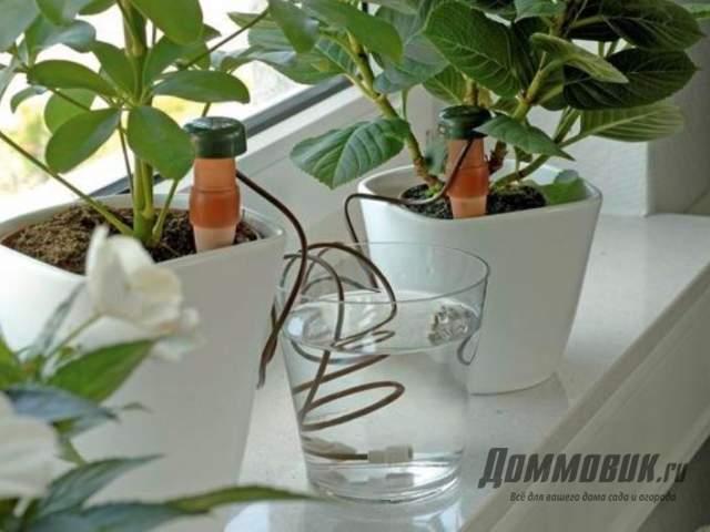 капельный полив для авокадо