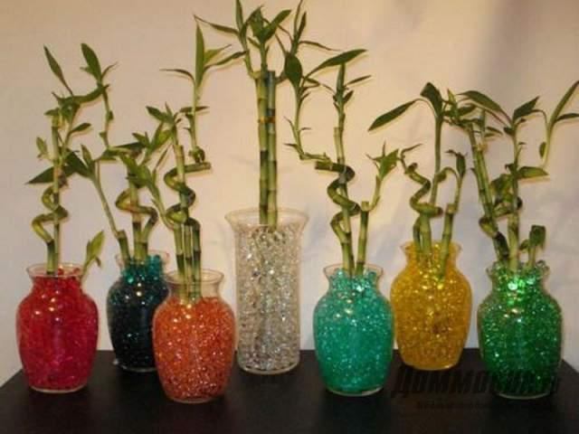 бамбук в гидрогеле