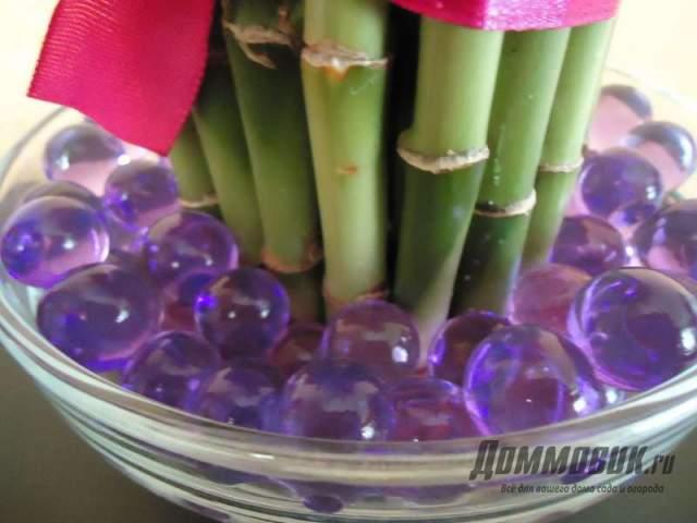бамбук в гелевых шариках