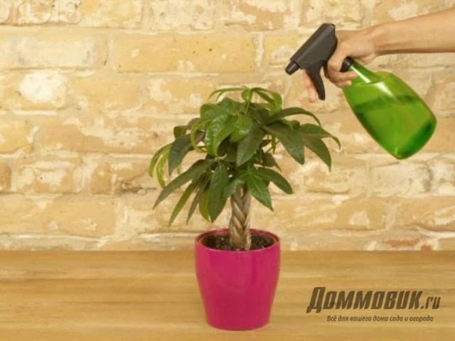 опрыскивание авокадо