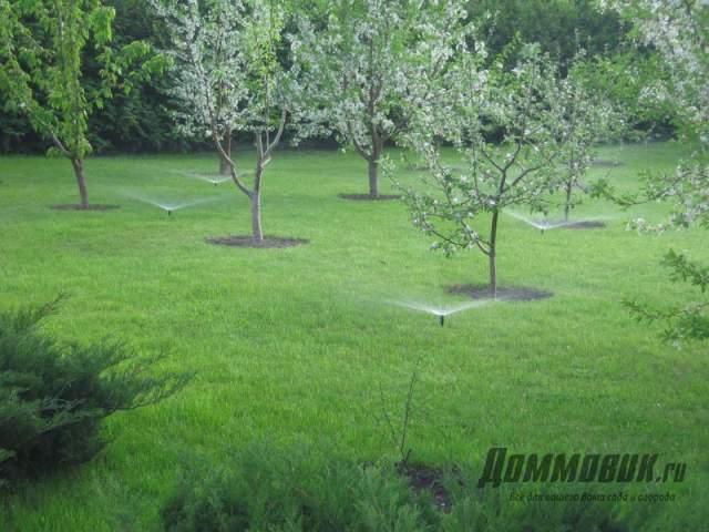 плодовый сад на участке