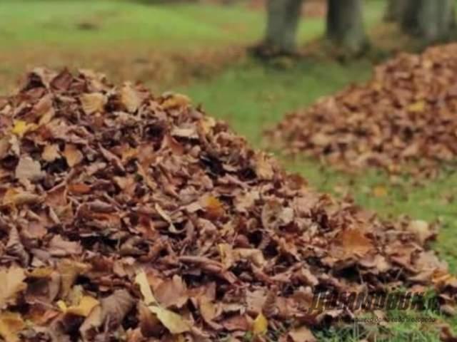 Как развести карбамид для опрыскивания деревьев