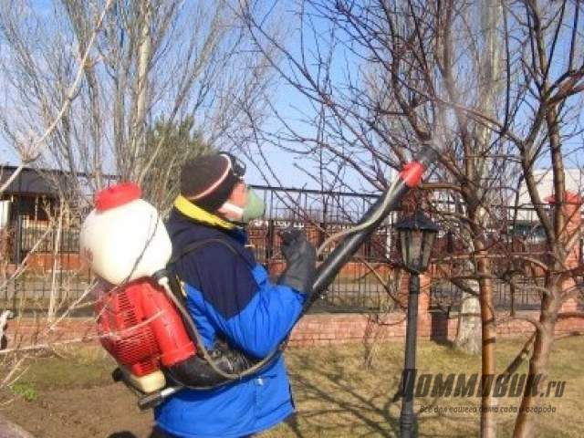 Как разводить нитрафен для опрыскивания деревьев