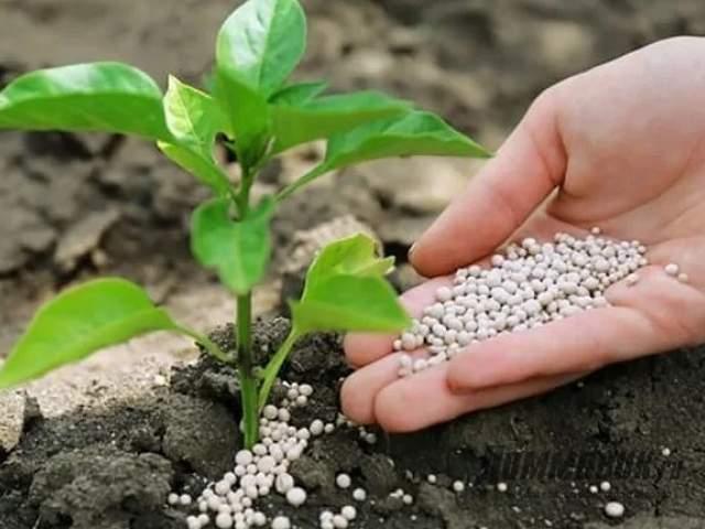 Нитроаммофоска - удобрение для растений
