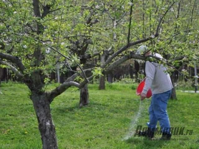Нитрофоска - удобрение для подовых деревьев весной