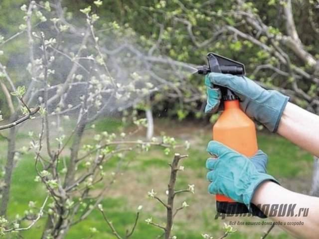Температура для опрыскивания деревьев