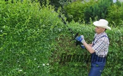 Как сделать живой забор на даче  и какие растения выбрать