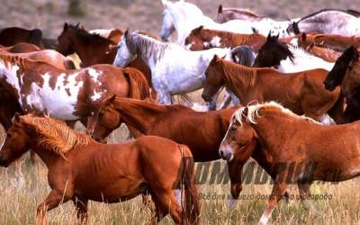 Разведение лошадей как вид бизнеса