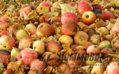 Сентябрьская забота – убираем урожай