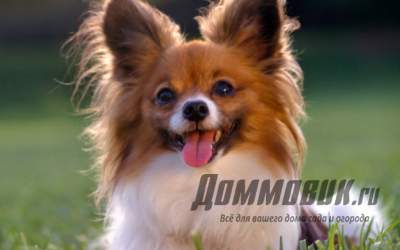 Разведение породистых собак в домашних условиях